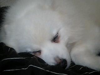 犬の歯槽膿漏_e0159969_191826100.jpg