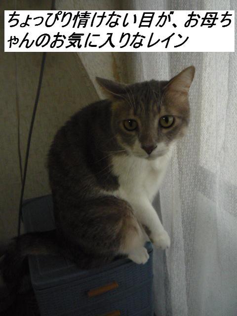 b0112380_1052845.jpg