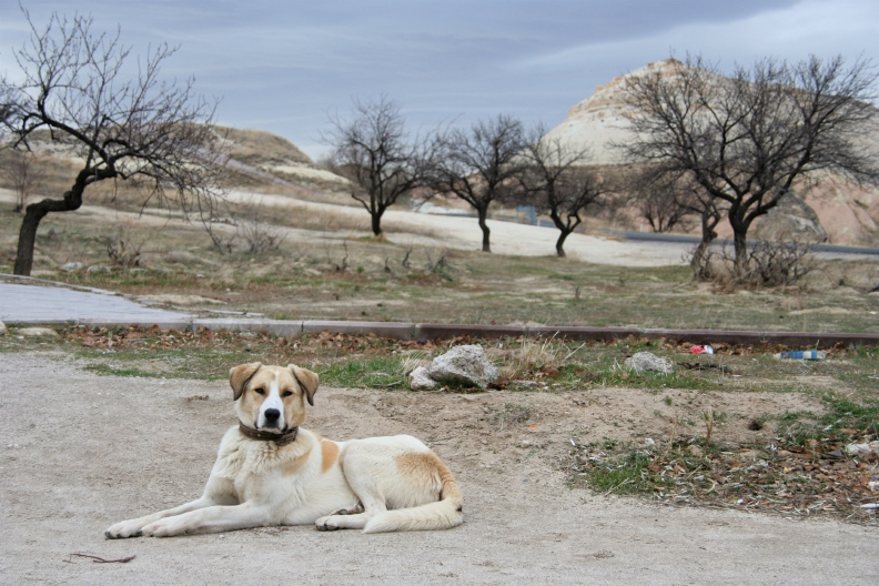 Turkey5 Nevşehir,urgup,Göreme National Park and Rock Site of Cappadocia_d0133581_1255375.jpg