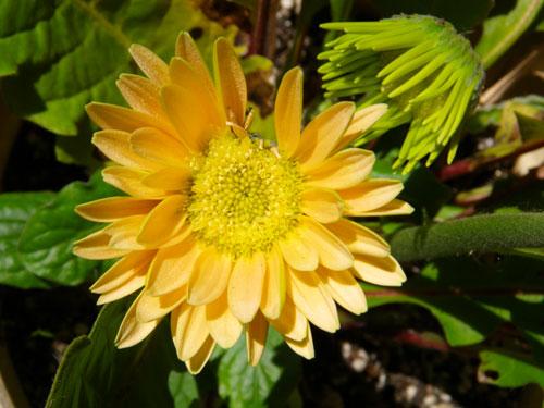 ネコ部屋の花達♪_a0136293_15503125.jpg