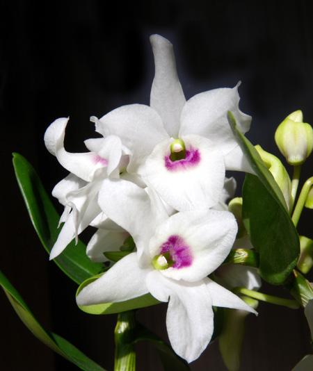 ネコ部屋の花達♪_a0136293_15505117.jpg