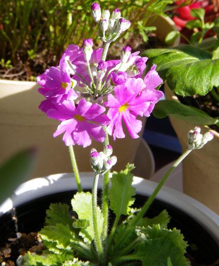 ネコ部屋の花達♪_a0136293_15515212.jpg