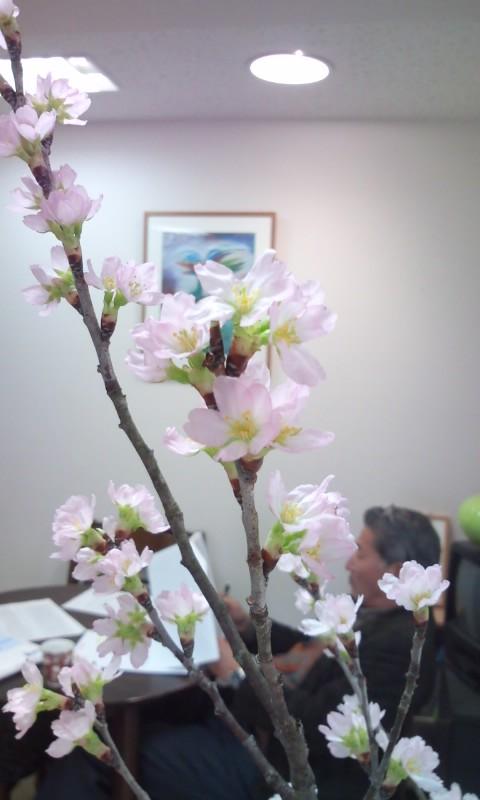 啓翁桜_b0172896_1753247.jpg