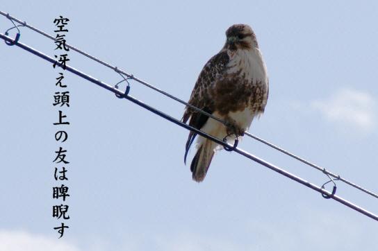 野摺_e0099713_1928355.jpg