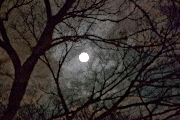 今夜は満月かと思ったら・・・_f0077521_20181498.jpg