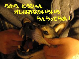 f0143123_20365130.jpg