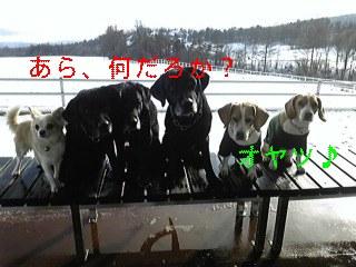 f0148927_18251027.jpg