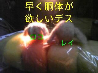 f0148927_1846472.jpg