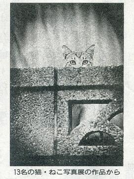 「13名の 猫・ねこ 写真展」が読売新聞で紹介されました Art Gallery 山手_f0117059_21544855.jpg