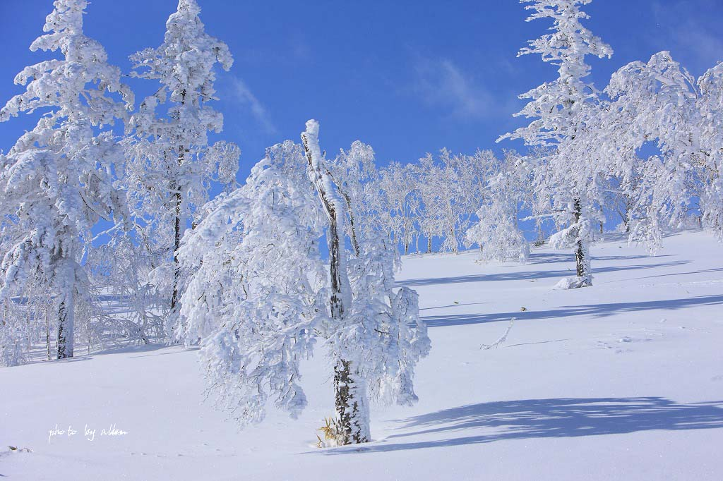 青空と樹氷より~_a0039860_18422383.jpg
