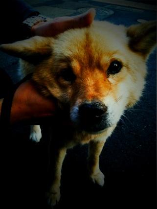 迷子犬_e0158970_130822.jpg