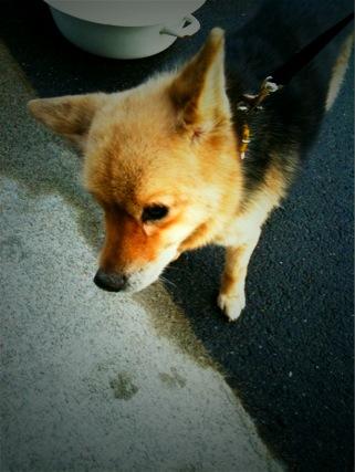 迷子犬_e0158970_130838.jpg