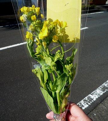 いぶすき菜の花マーチ・その5_d0030373_23395459.jpg