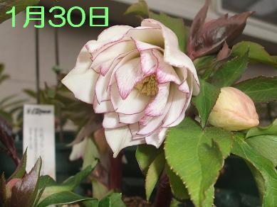 f0179203_916356.jpg