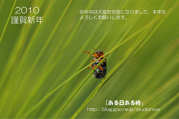 b0173807_955338.jpg