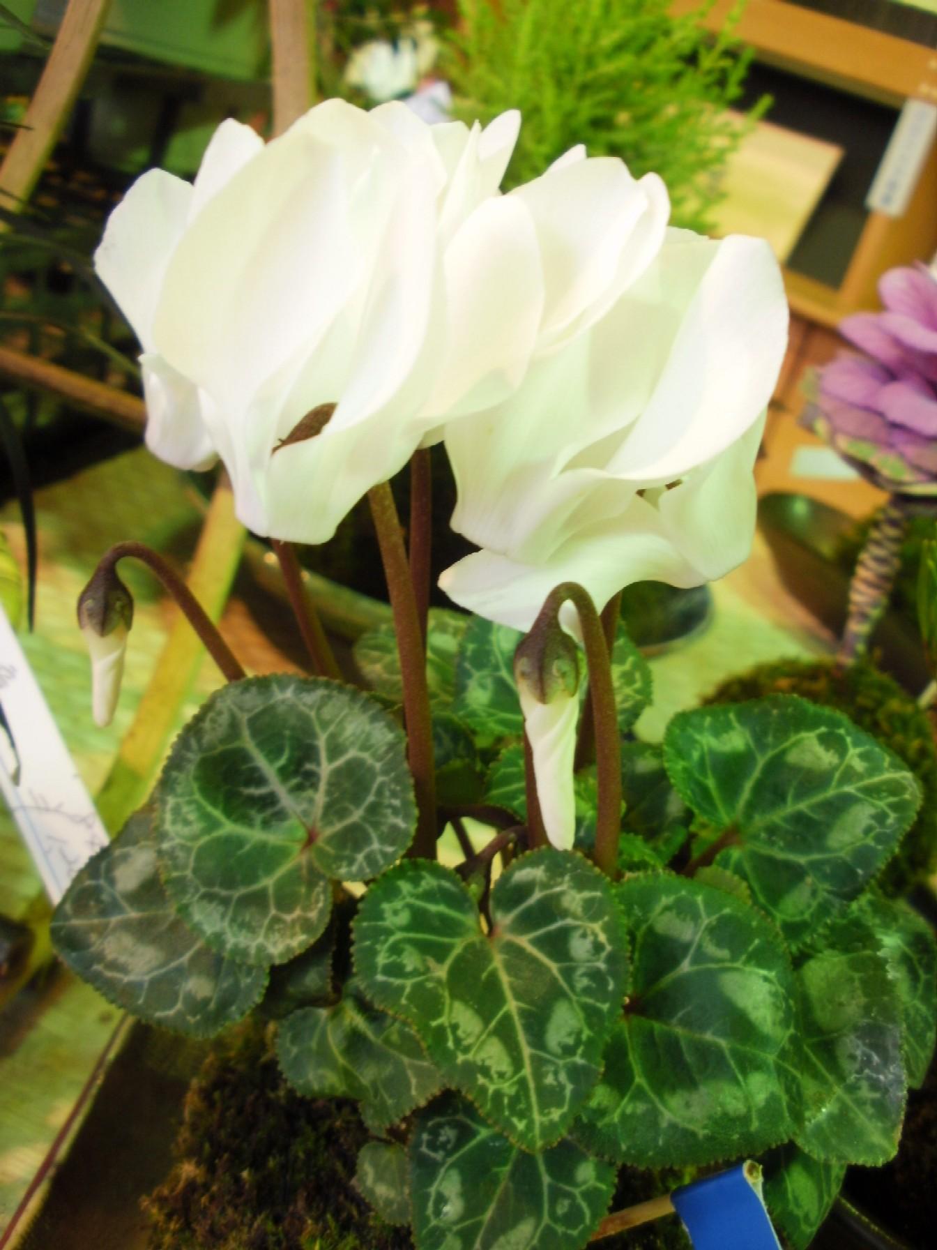 """花文化研究所 """"大地の庭""""にて☆_e0135219_13541785.jpg"""