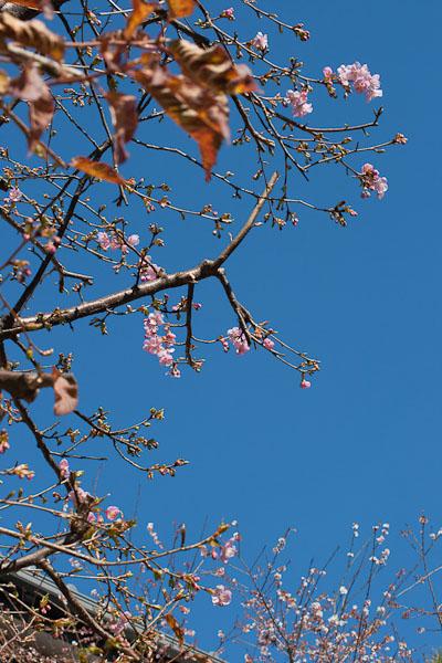 春の陽気_f0077521_16105684.jpg