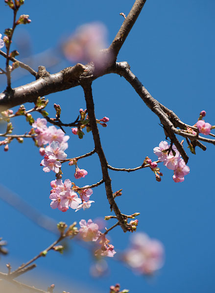 春の陽気_f0077521_1662456.jpg