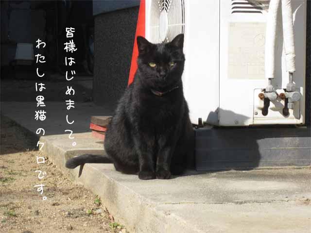 ☆まねきねこ☆_c0205323_1112289.jpg