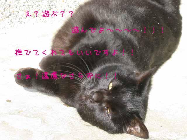 ☆まねきねこ☆_c0205323_1118143.jpg