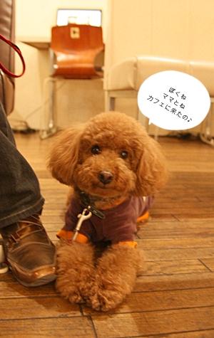 クッキーくんと行く♪_e0191026_10215720.jpg