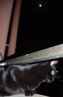 ブルームーン猫 のぇる編。_a0143140_23235161.jpg