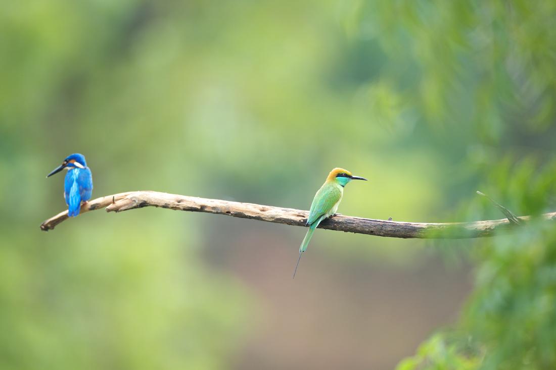 Sri  Lanka (スリランカ)探鳥_d0013455_15531886.jpg