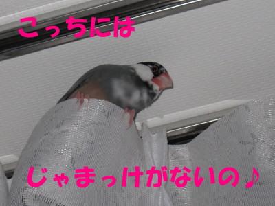 b0158061_20543075.jpg