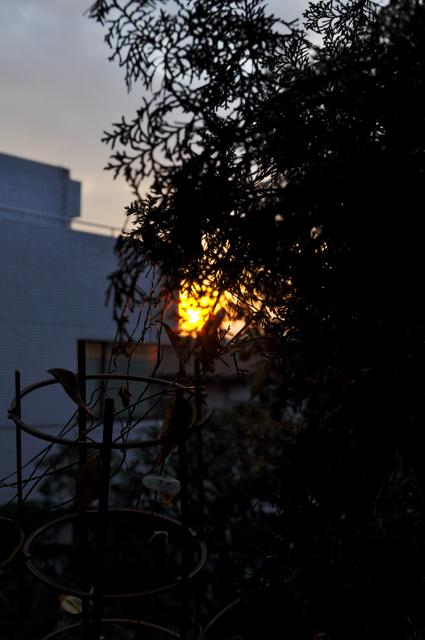 夕陽って時には悲しい、、、_a0031363_5374833.jpg