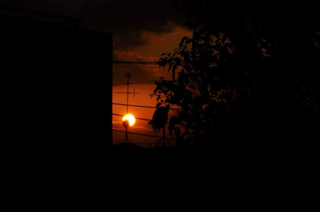 夕陽って時には悲しい、、、_a0031363_538387.jpg