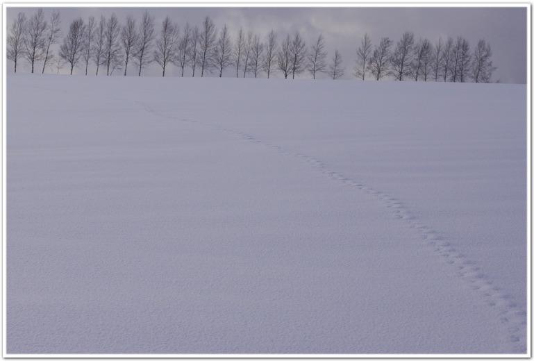 f0167379_2011435.jpg