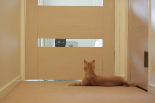 扉の向こうから、櫂っちを覗く黒い影(小僧)