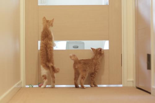 扉にしがみついてリビングを覗く茶系兄妹