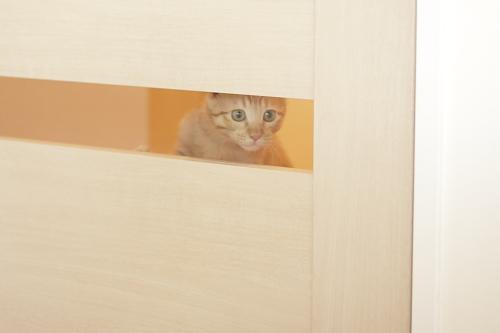 廊下からリビングを覗く櫂っち