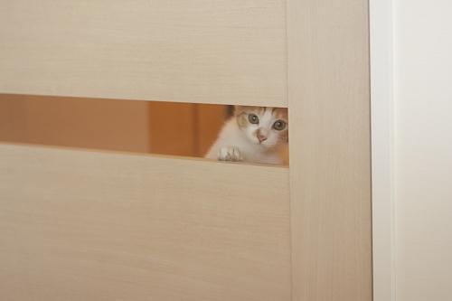 廊下からリビングを覗く澪っち