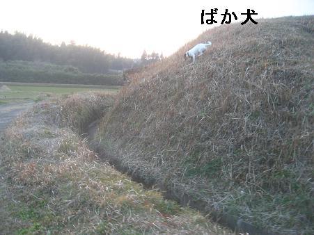 f0106692_1863674.jpg
