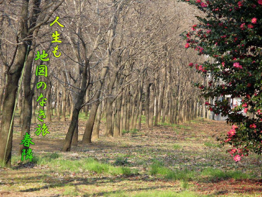 f0137096_1950267.jpg