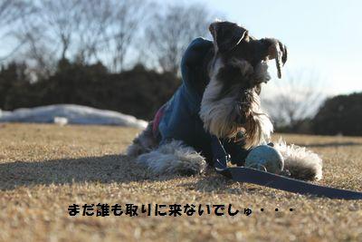 f0197317_1151349.jpg