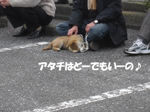 f0143123_2012277.jpg