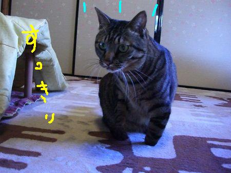 a0099131_16161179.jpg