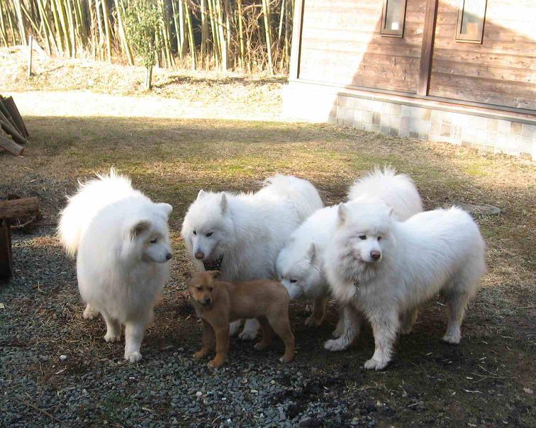 滋賀の山で熊鍋~_b0177436_22142517.jpg