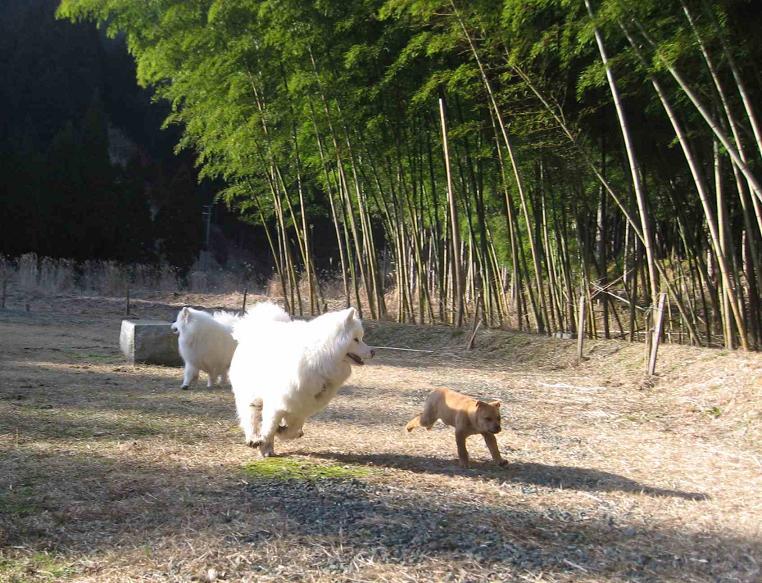 滋賀の山で熊鍋~_b0177436_22234517.jpg