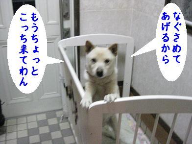 b0151748_229514.jpg