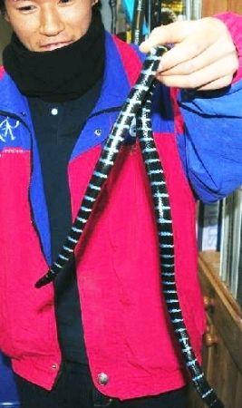 猛毒のウミヘビ捕獲 すさみ漁港内_b0052564_12383125.jpg
