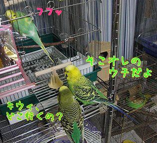 f0196665_0384723.jpg