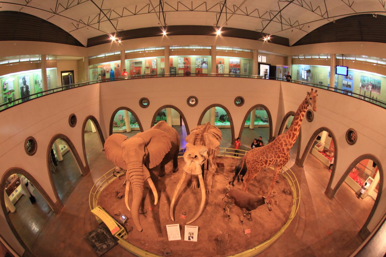 ナイロビ国立博物館_c0187779_8421586.jpg