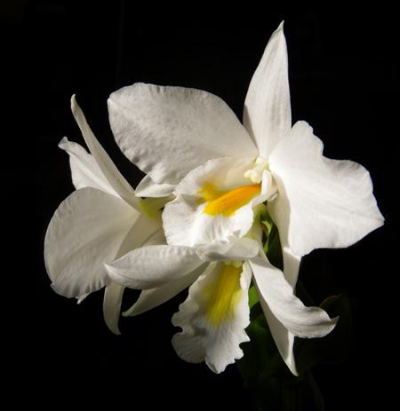 窓辺の花とエアープランツ♪_a0136293_18101581.jpg