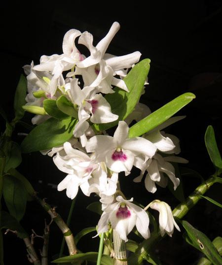窓辺の花とエアープランツ♪_a0136293_181036100.jpg