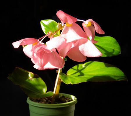 窓辺の花とエアープランツ♪_a0136293_18114378.jpg