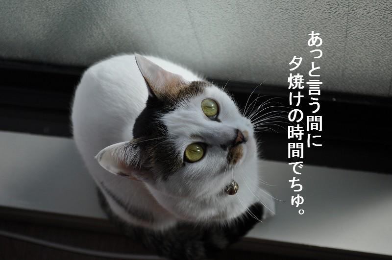 e0171996_16381310.jpg